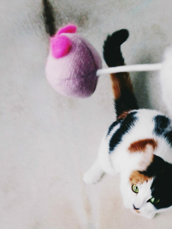 katt-mus-katteleke-vsco-bilderedigering-app