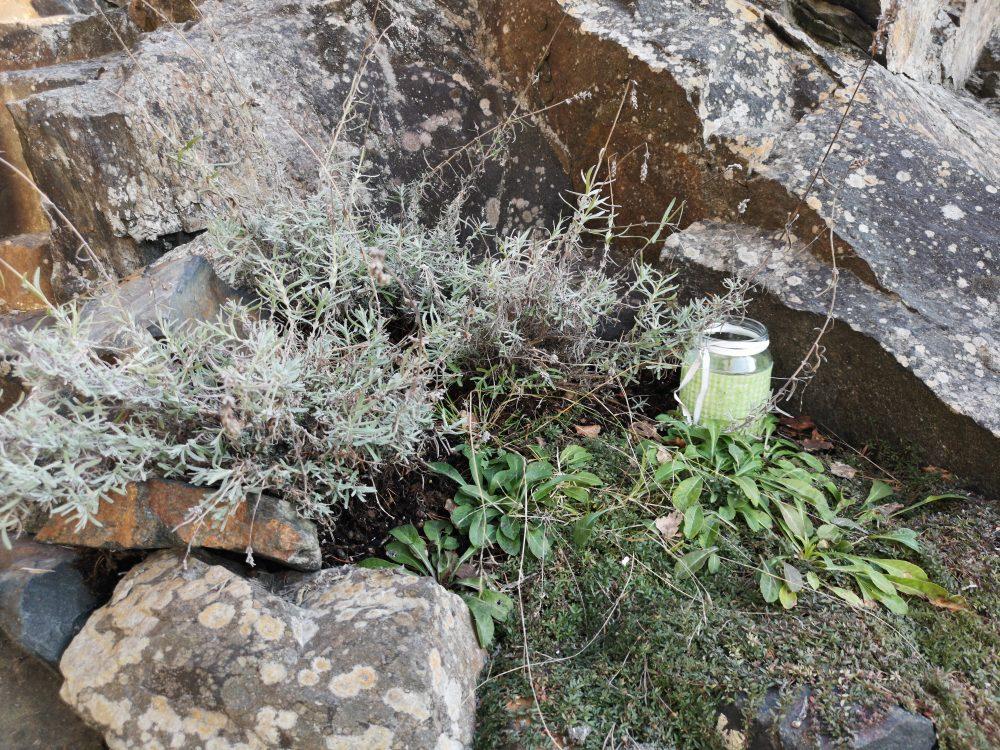 2019-04-06 18.31.58-lavendel-klipp-klippet lavendel