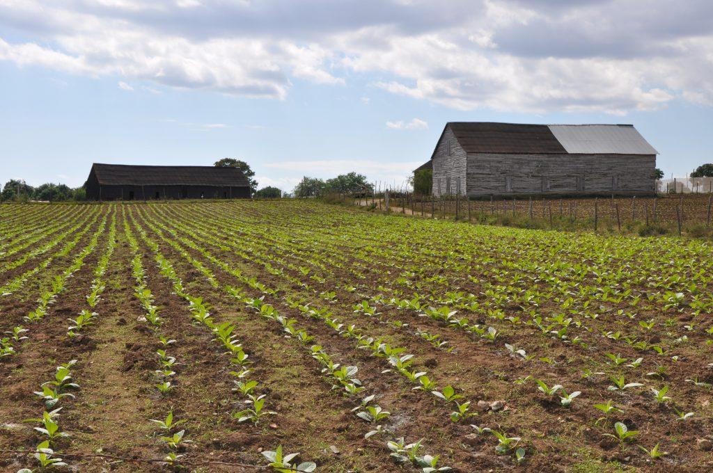 LatinA Tours Kuba Pinar del Rio - Finca Luis Vergara, Farming, Ranch, House, Cuba