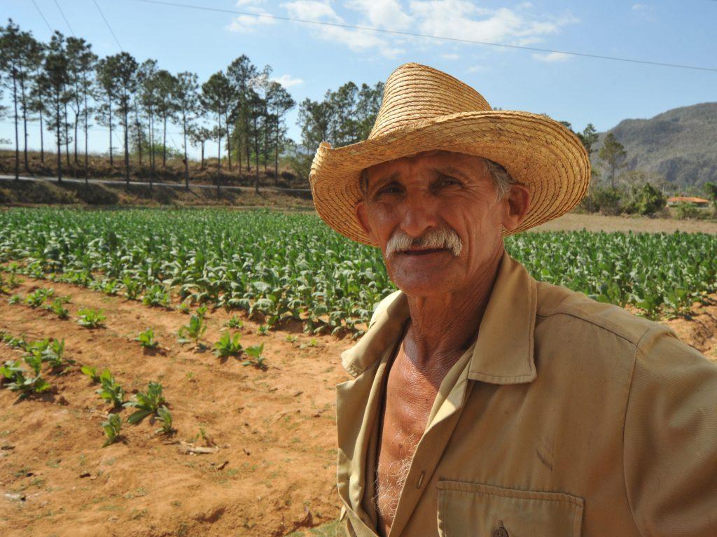 LatinA Tours Kuba Cuba Pinar del Rio - Viñales valley, Tobacco farmer,