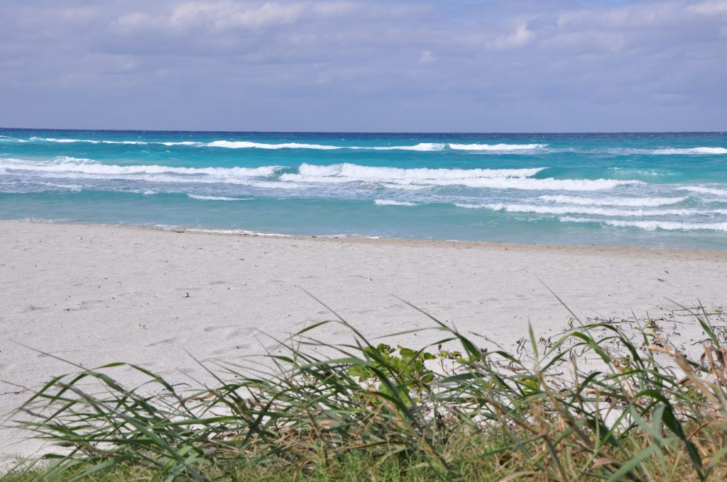 LatinA Tours Kuba Varadero - Beach, Ocean, Plants, Occidental Region, Cuba