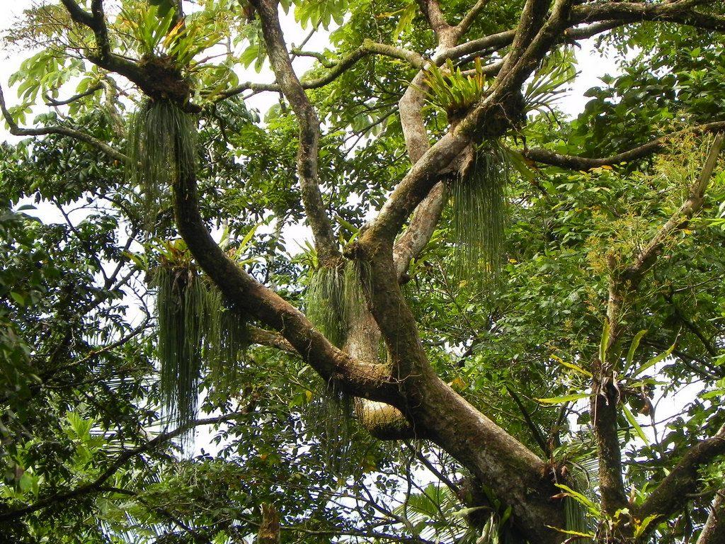 LatinA Tours Costa Rica Ausflug Regenwald