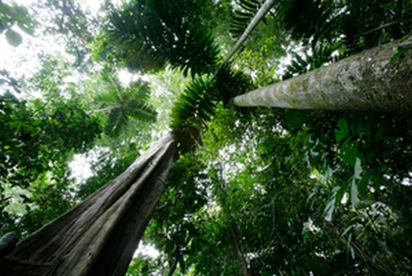 LatinA Tours Costa Rica Forest Blick nach oben