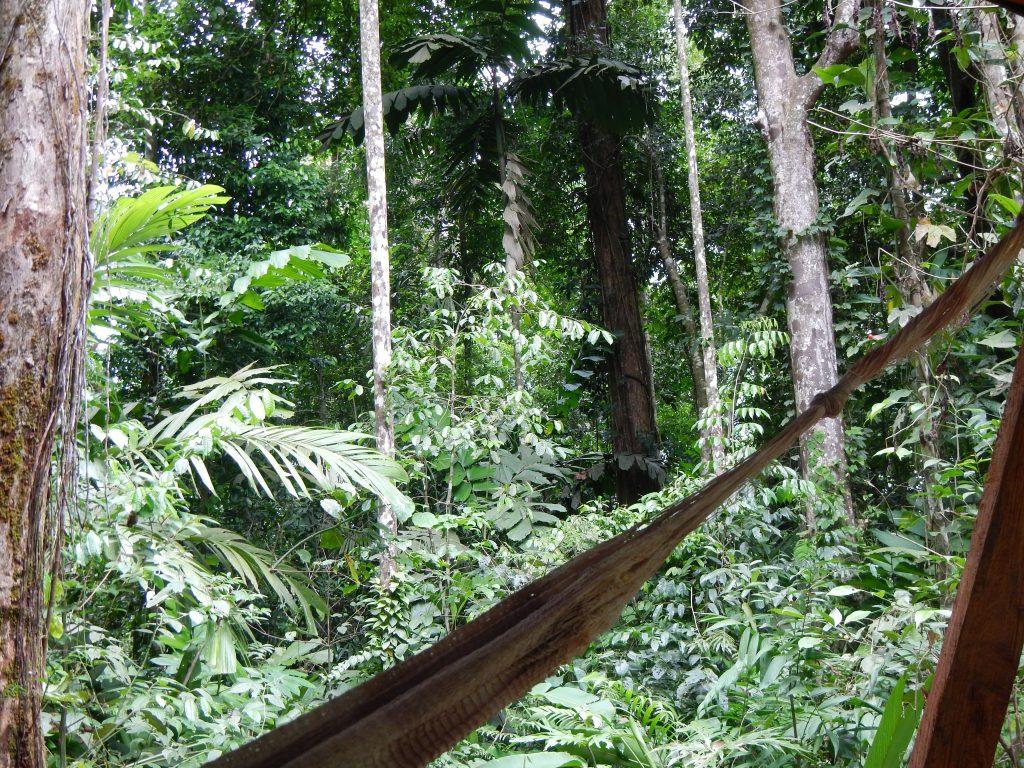 LatinA Tours Costa Rica Selva Bananito Lodge Plattform Hängematte