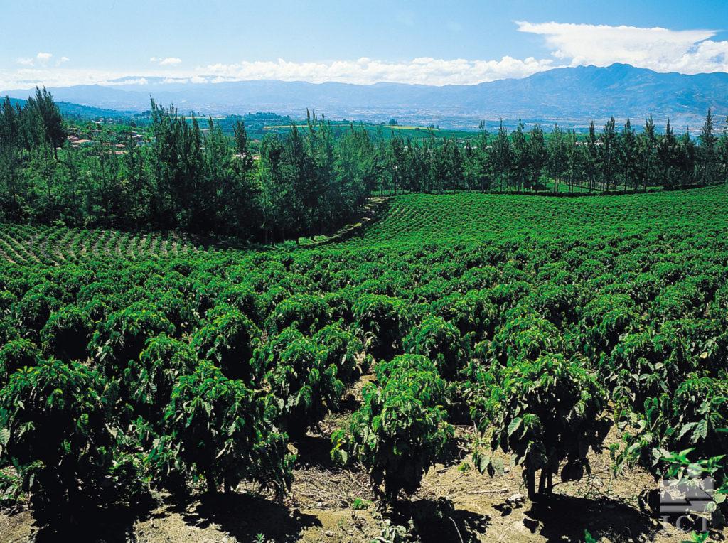 LatinA Tours Costa Rica Kaffeeplantage