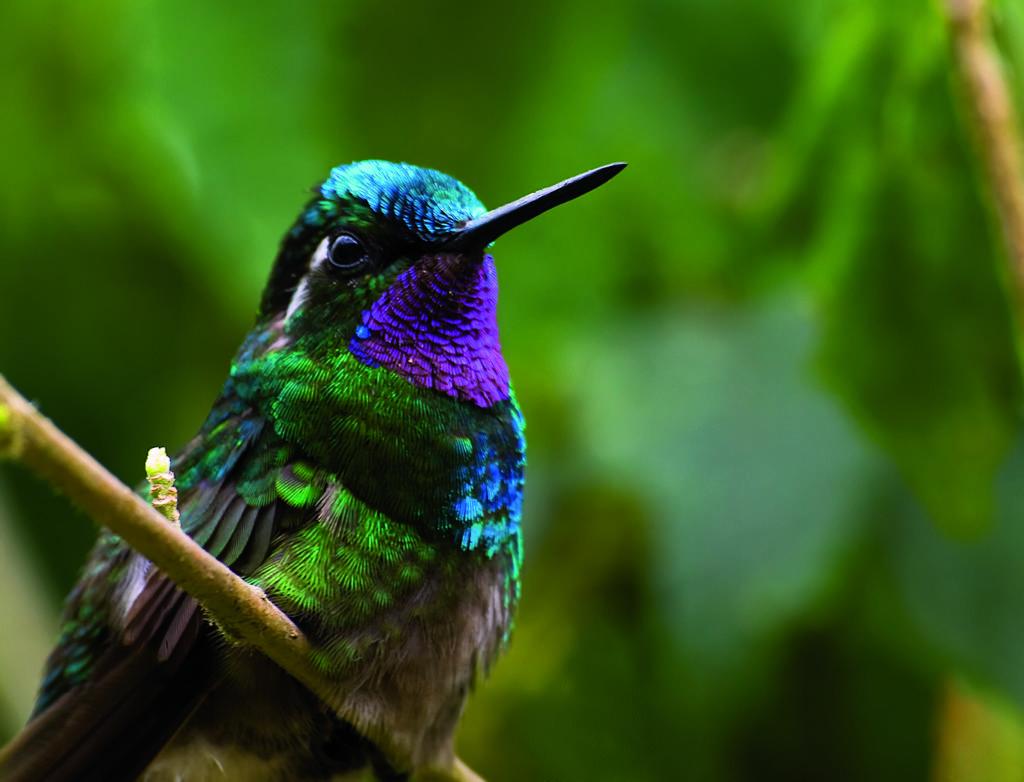 LatinA Tours Costa Rica Kolibri