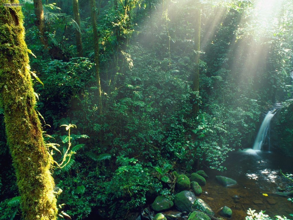LatinA Tours Costa Rica Monteverde Cloud Forest