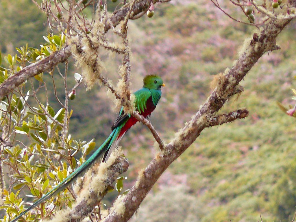 LatinA Tours Costa Rica Quetzal