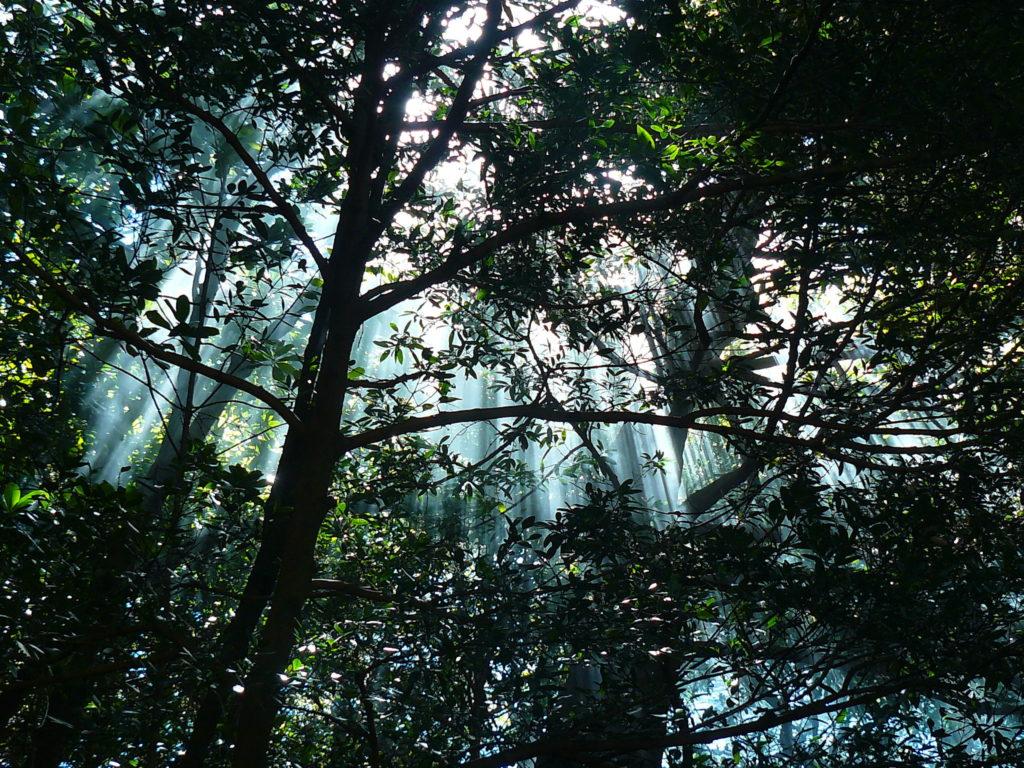 LatinA Tours Costa Rica Rincon De La Vieja Forest