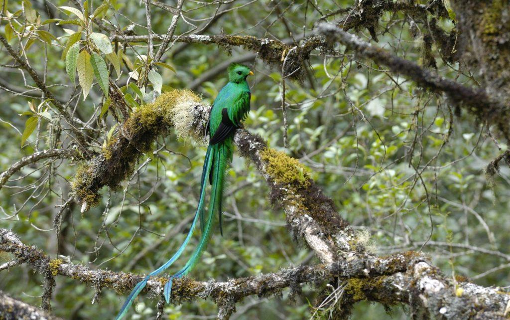 LatinA Tours Costa Rica Savegre Lodge Quetzal