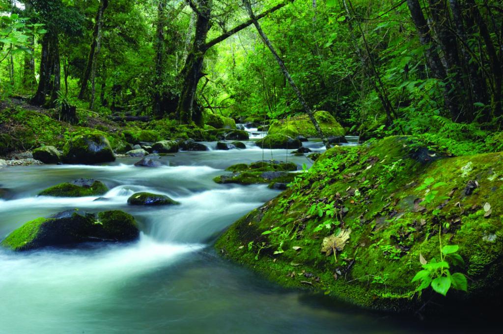 LatinA Tours Costa Rica Savegre Lodge Savegre River