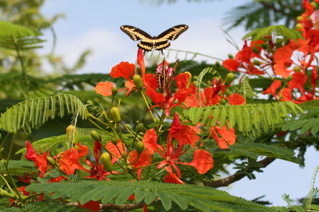 LatinA Tours Costa Rica Schmetterling