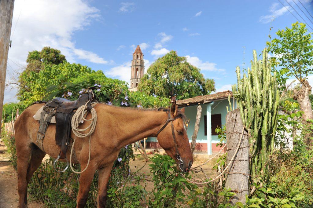 LatinA Tours Kuba Trinidad - Manaca Iznaga, Horse, Nature, Plant, Central Region