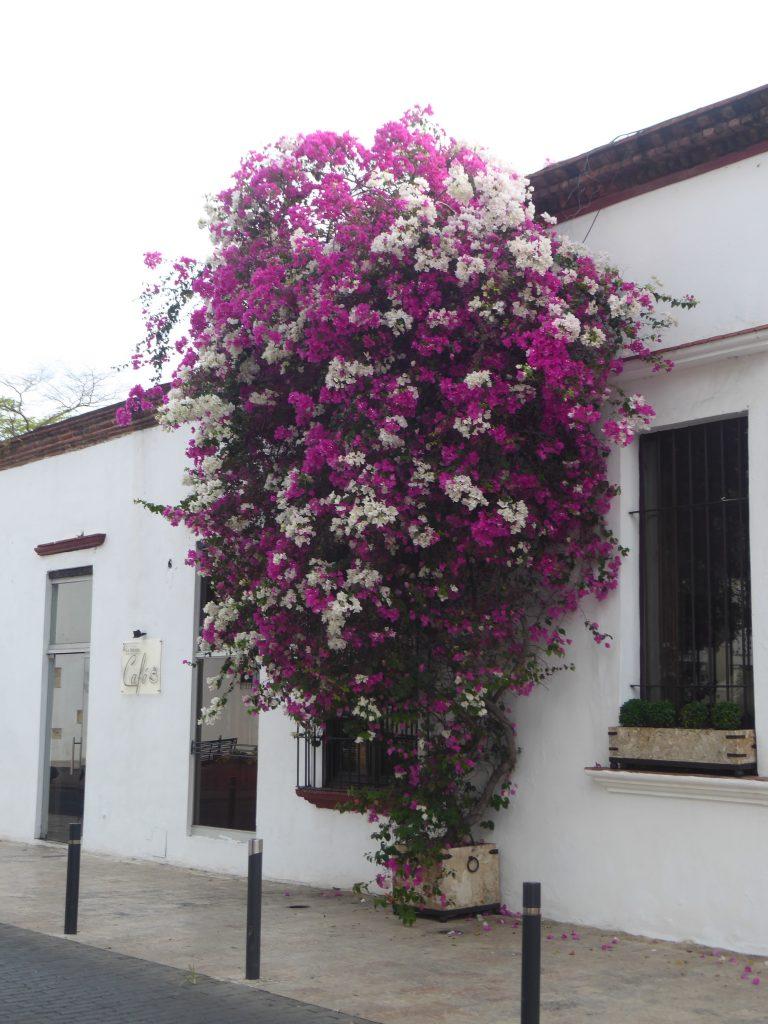 LatinA Tours Santo Domingo DomRep Blumen Hauswand Altstadt