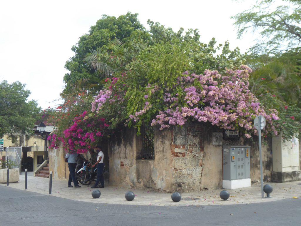 LatinA Tours Santo Domingo Historische Altstadt Blumenprach Dominikanische Republik