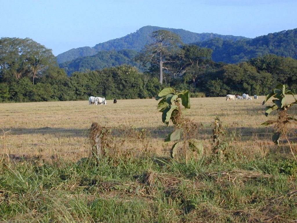 LatinA Tours Costa Rica Guanacaste Plains Landschaft