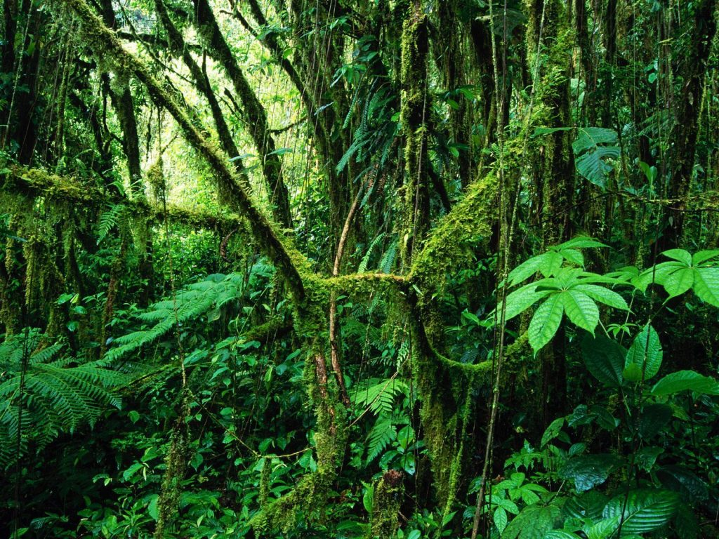 LatinA Tours Costa Rica Monteverde Cloud Forest Nebelwald