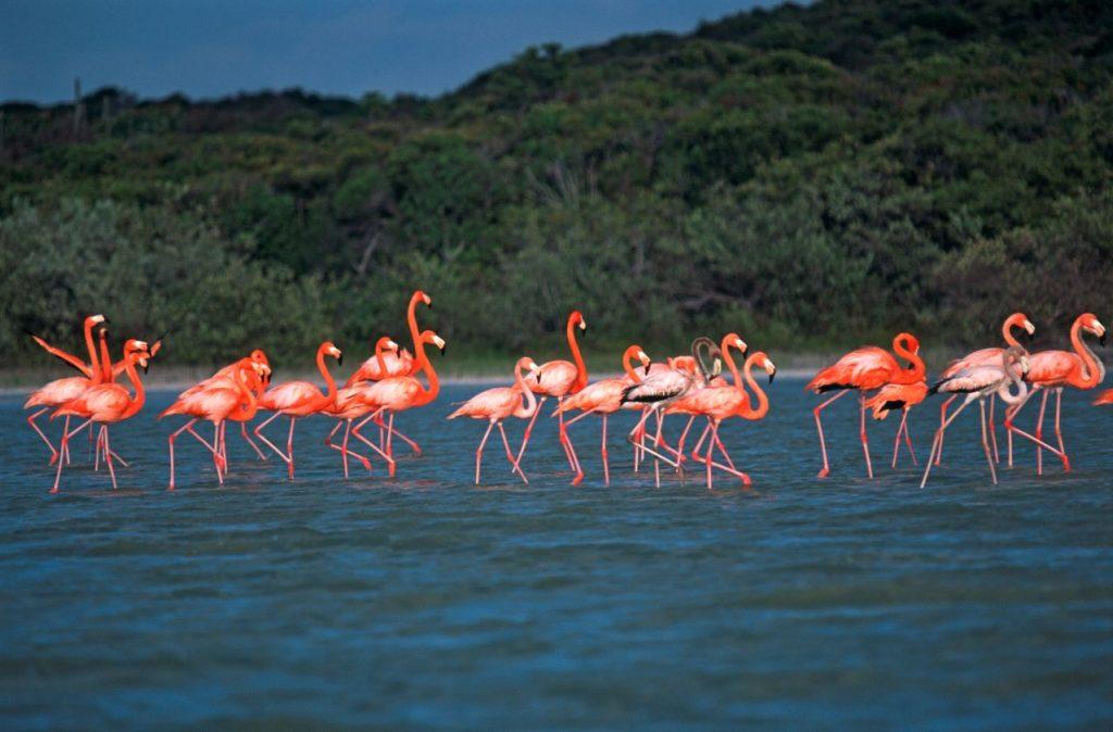 LatinA Tours DomRep Laguna de Ovideo Flamingokolonie Flamingos