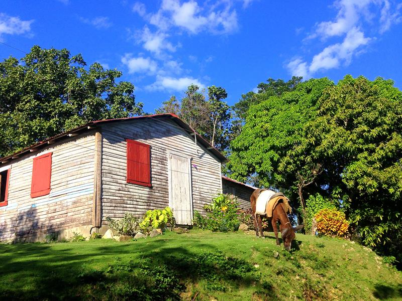 LatinA Tours Domrep Tubagua Landschaft Pferd ländlich