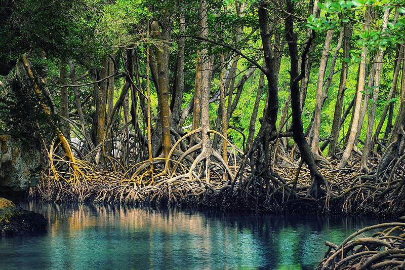 LatinA Tours Dominikanische Republik Los Haitises Mangroven