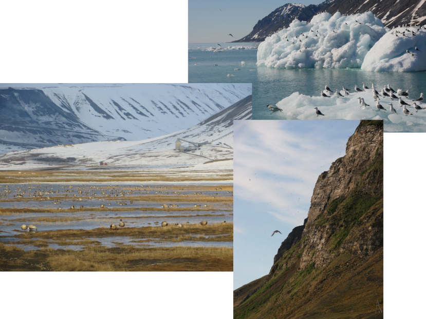 Pictures of marine and terrestrial habitats around Arctic Svalbard. By Eike Stübner