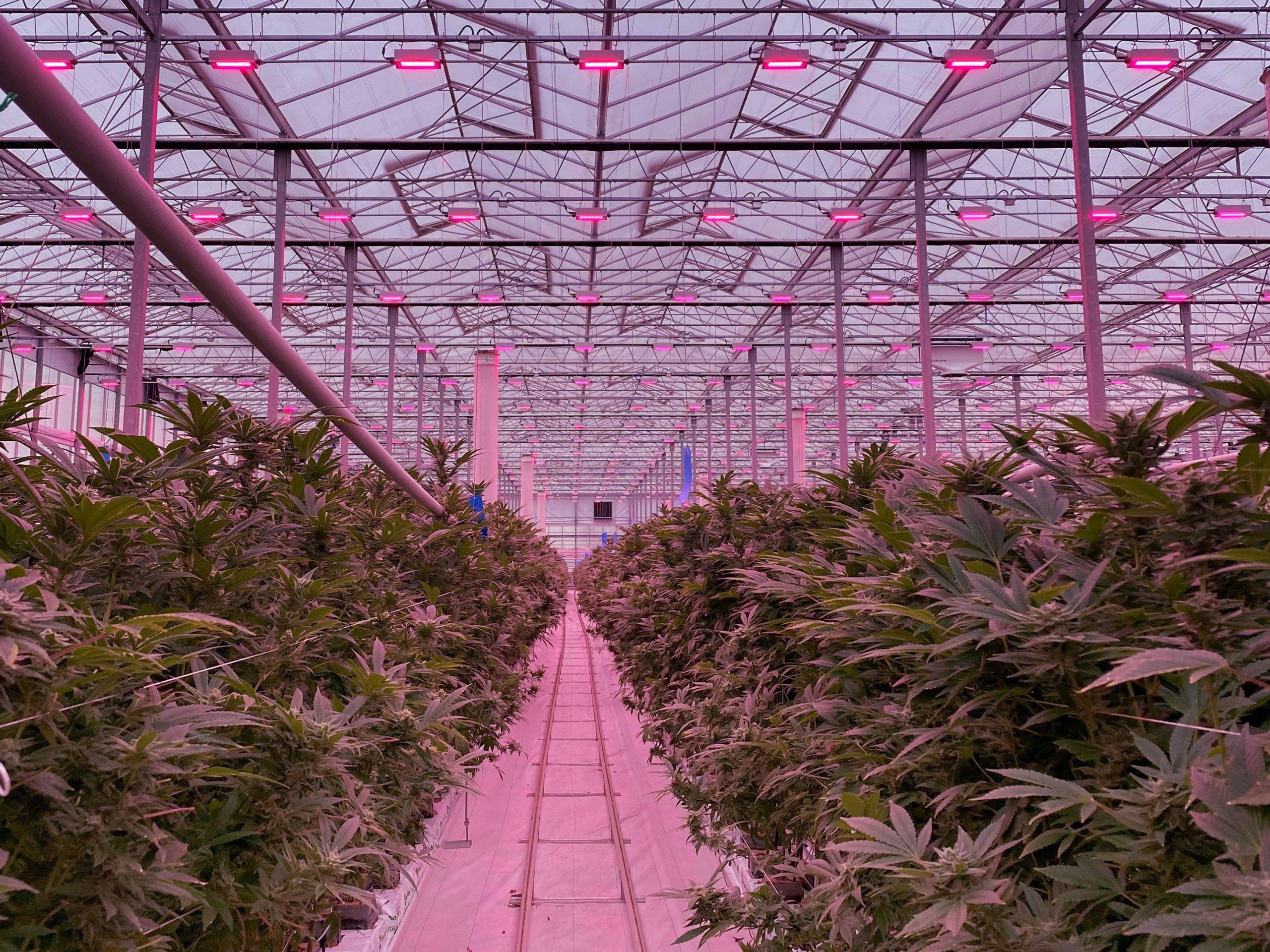 Medisun Inc x Legal Cannabis Coalition