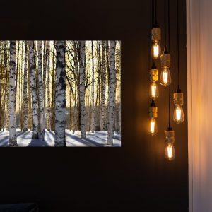 Birch - From Härjedalen with love