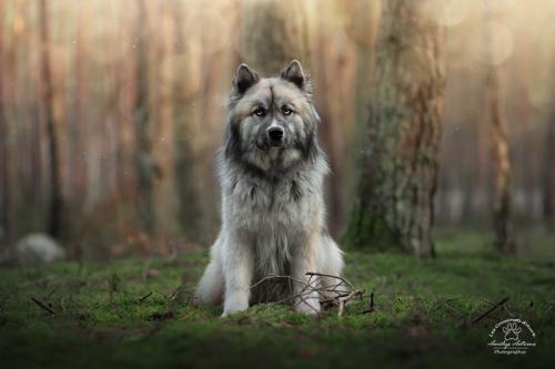 Meeko - Photo réalisée lors du workshop mystère et féérie avec avec Eden Photography et Pikture Arts.