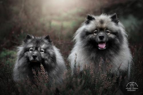 Viking & Narnia - Photo réalisée lors du workshop mystère et féérie avec avec Eden Photography et Pikture Arts.
