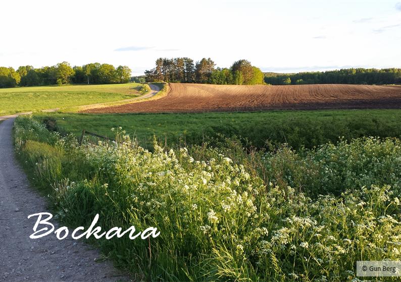 Bockara