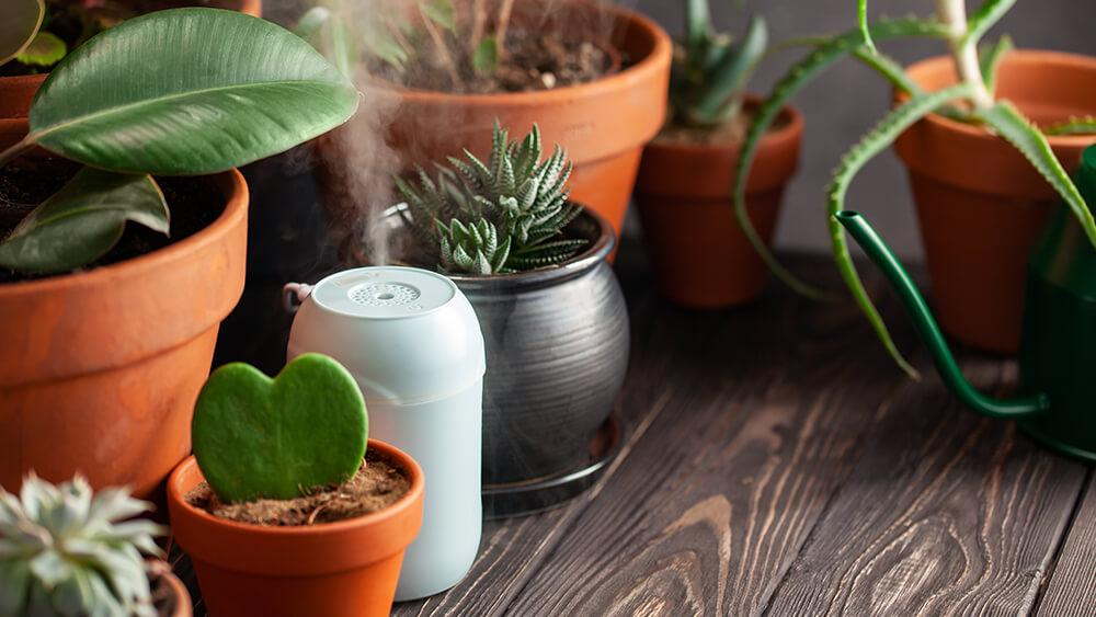 Luftfukter planter helse