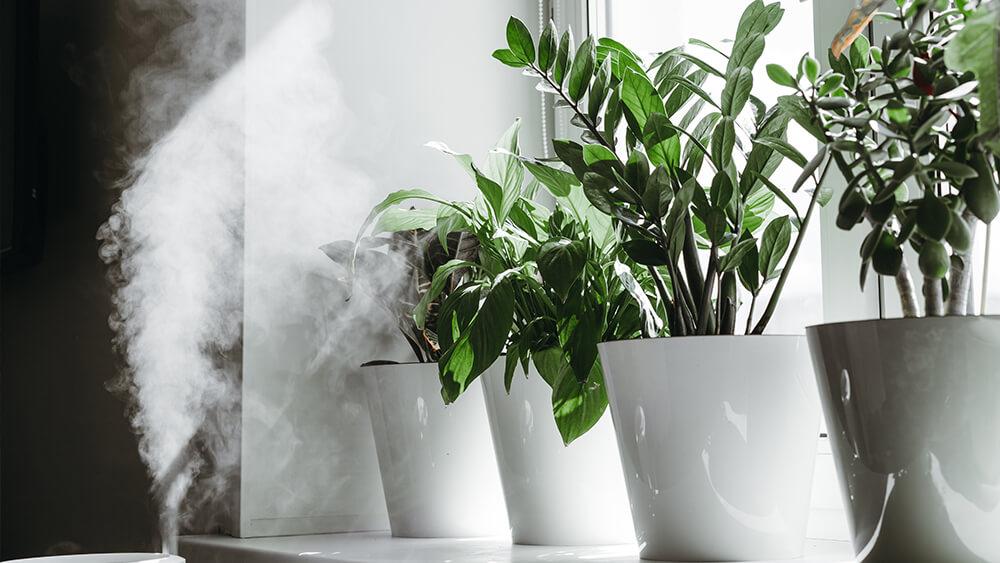 Luftfukter planter