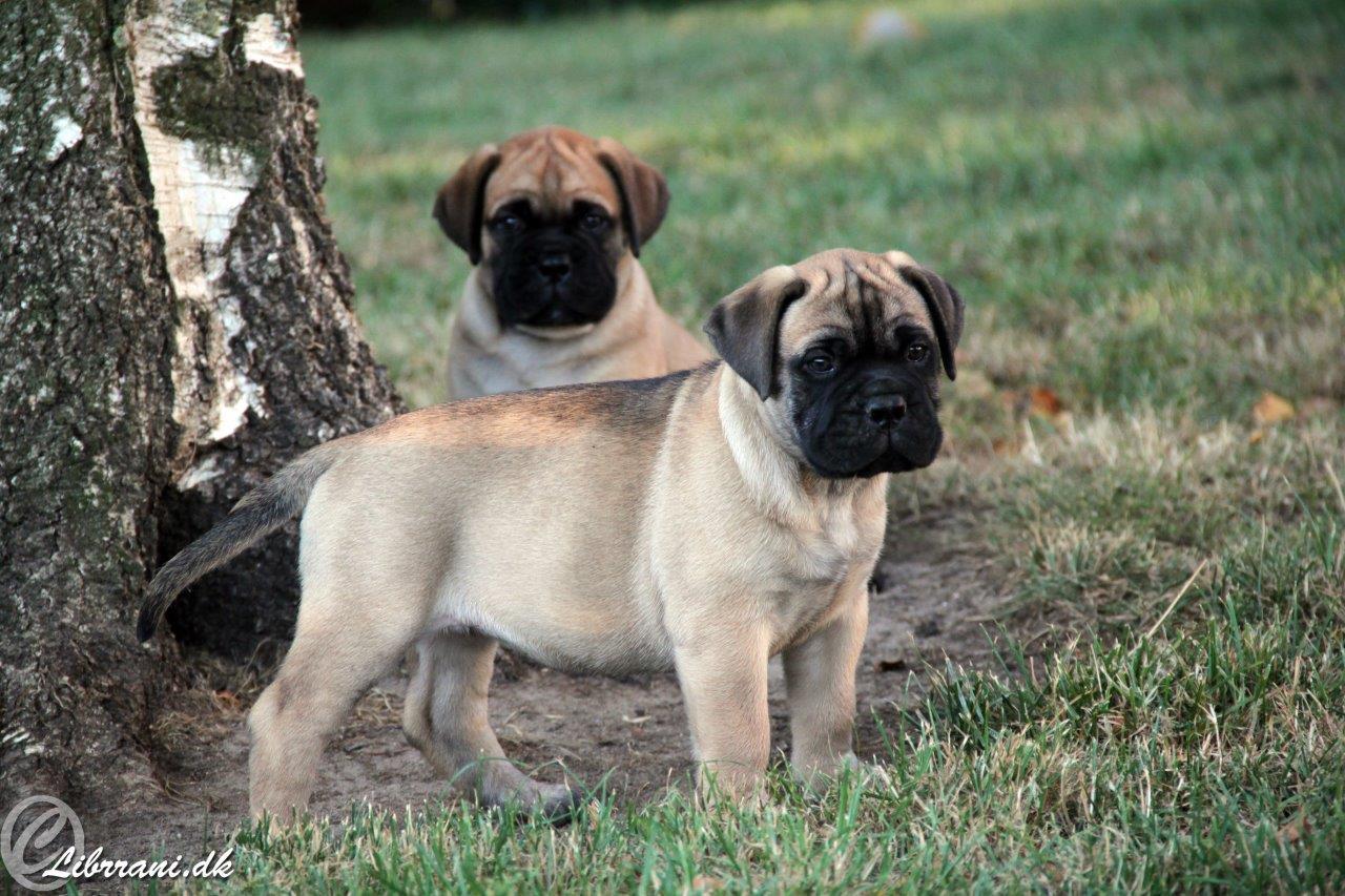 I-puppies (4+5)