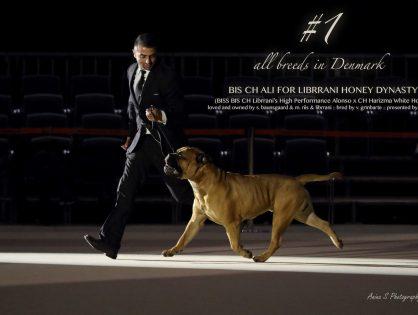 #1 show dog all breeds 2017