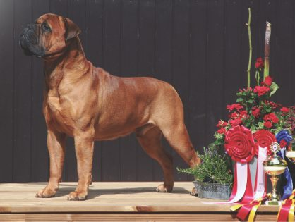 #1 show dog all breeds 2015