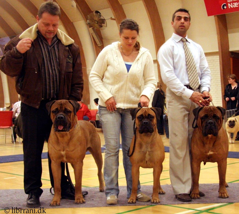 B-puppies (2+1)