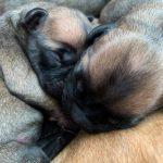 N-puppies (5+3)