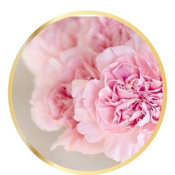 Herzmensch Archetyp Rose Kristallkinder