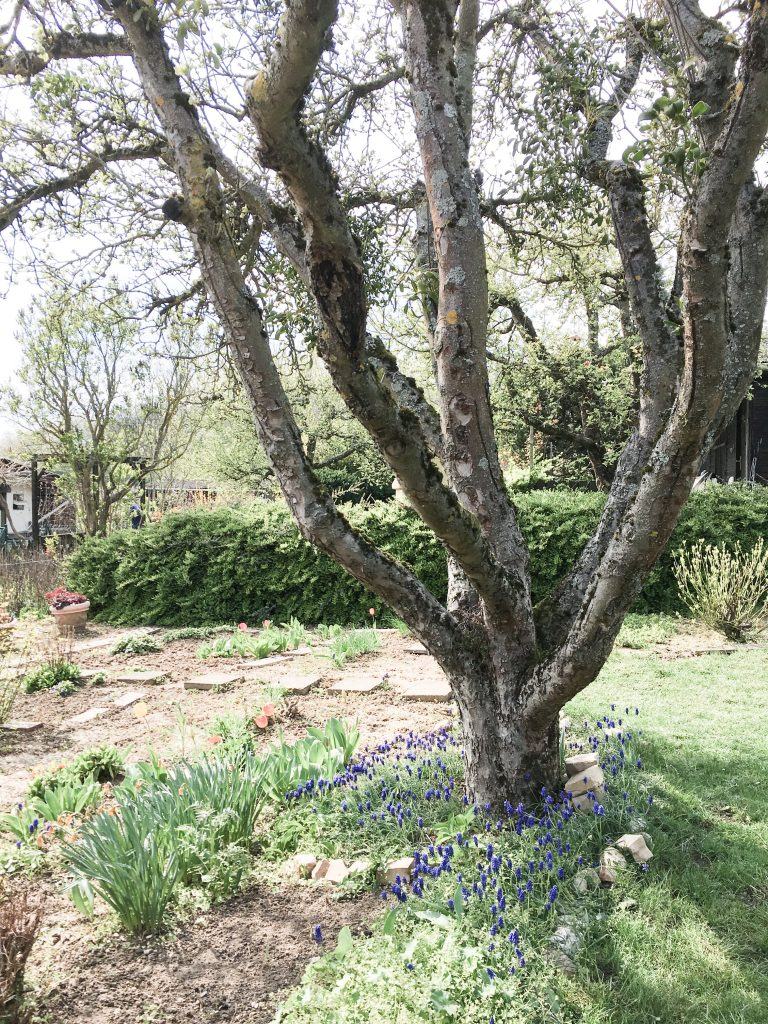 Gartenlaube Kleingarten. Foto: Lieblings Blog