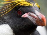 Penguin Eyes