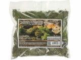 Summer Mix Lichen