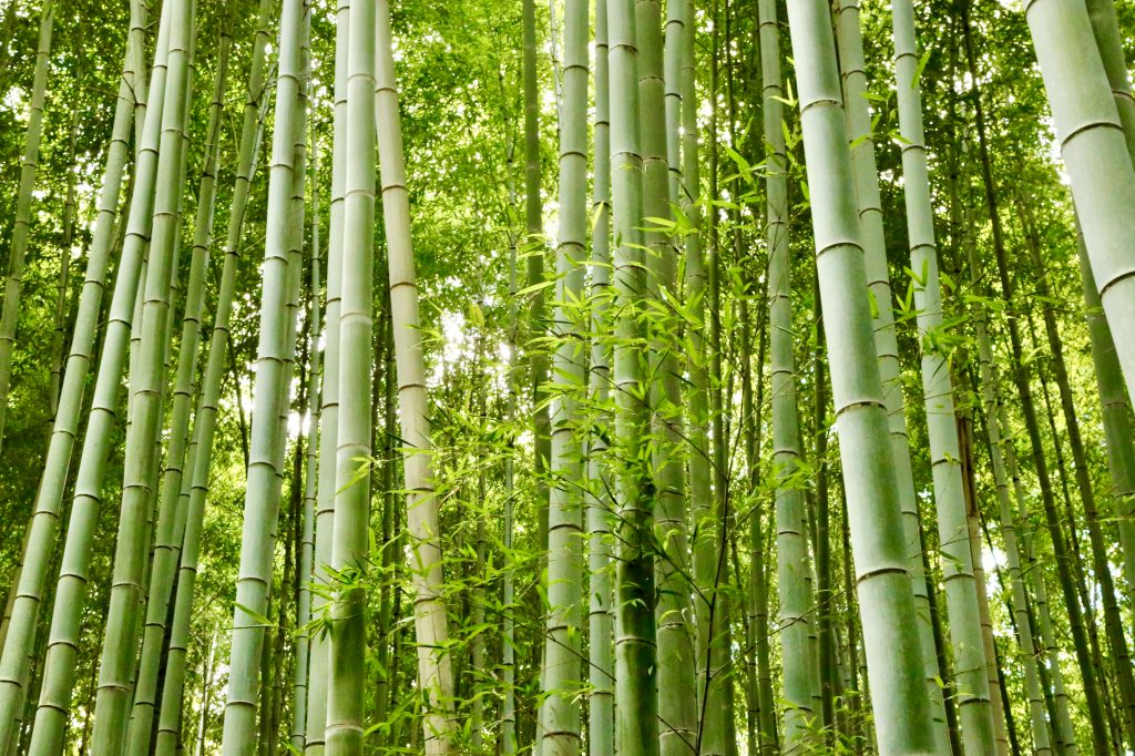 A bamboo groove
