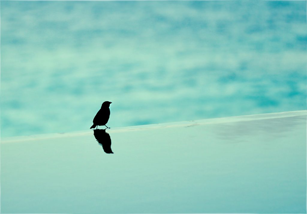 A black bird sitting on the edge of an infinity pool.