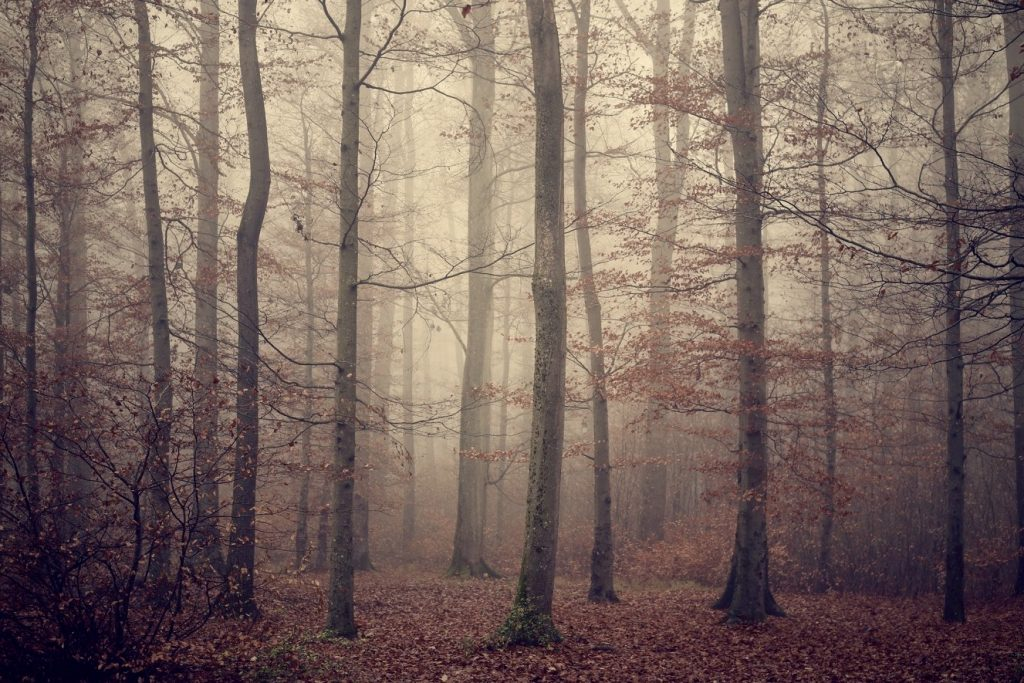 A foggy forest in the autumn