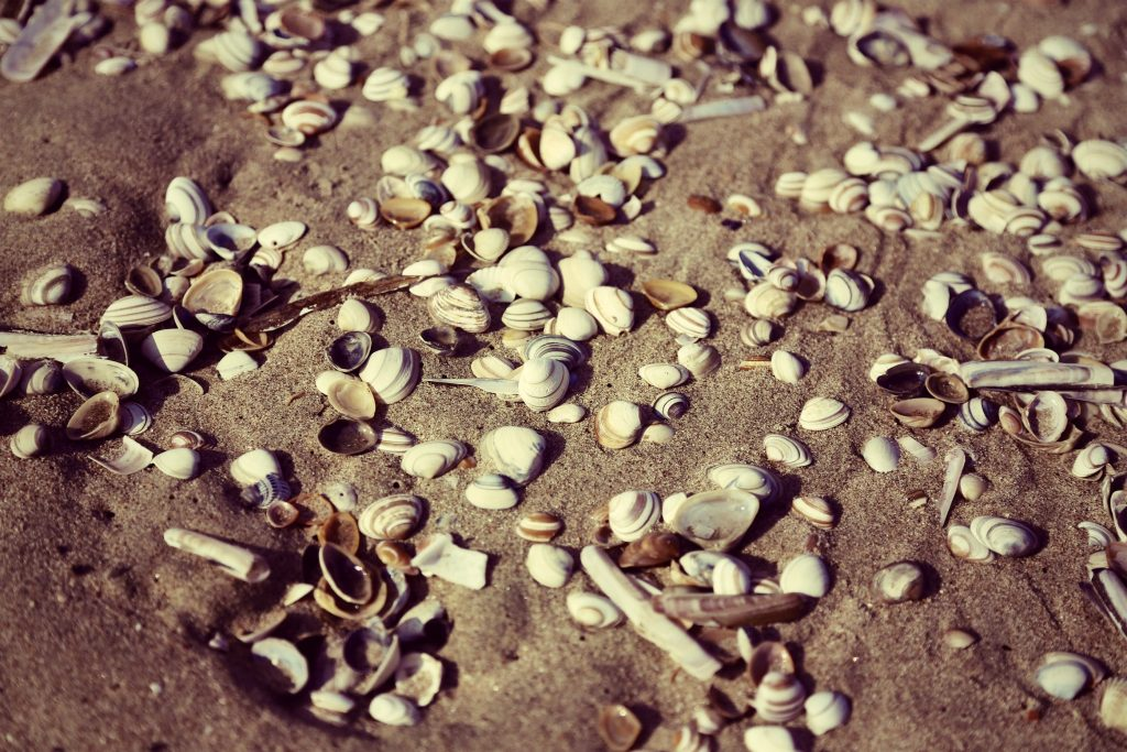 Sea shells on a sandy beach at Noordwijk, The Netherlands.