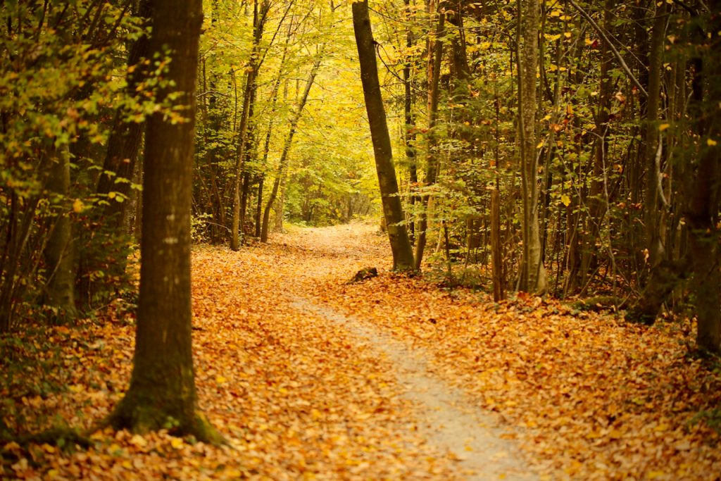 A winding path in the woods in the autumn. Photo by Mihaela Limberea.