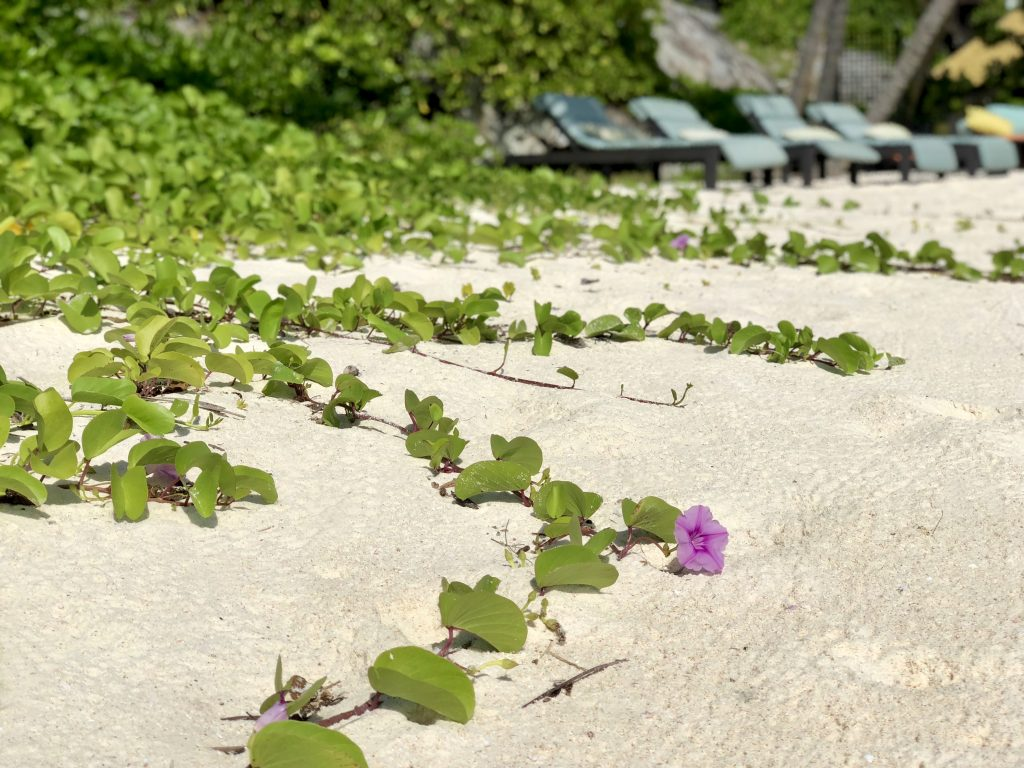 Beach and flowers on Fregate Island. Photo by Mihaela Limberea.