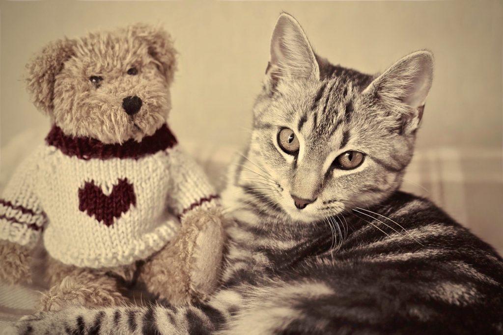 A tabby kitten with a teddy bear