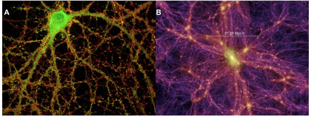 A picture of Hippocampal mouse neuron juxtaposed to a picture of a  Cosmic web to show similarities in structure.