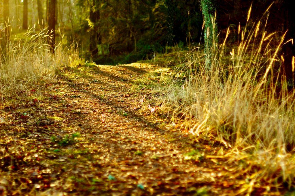 A sun illuminated path in the forest. Photo by Mihaela Limbertea.